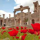 Poppies at Ephesus, Turkey